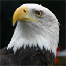 De Keijzer Roofvogels